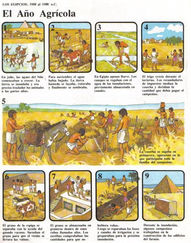 añoagricola-egipcio